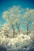 Winter Trees Posters - Winter Trees Poster by Lena Auxier