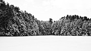 New Hampshire Prints - Winter Trees Mink Brook Hanover NH Print by Edward Fielding