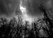 Silhouettes Photo Prints - Winter Trees Moving Sky Print by Bob Orsillo