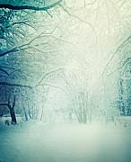 Mythja  Photography - Winter trees