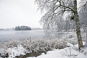 Evija Freidenfelde - Winter view