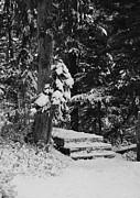 Marilyn Wilson - Winter Walk - bw