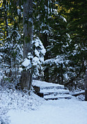 Marilyn Wilson - Winter Walk