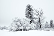 Winter White Print by Mike  Dawson