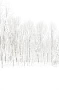 Karol  Livote - Winter White Out