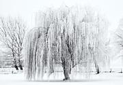 Mike  Dawson - Winter Willow