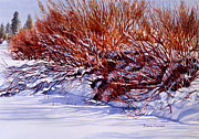 Winter Snow Landscape Posters - Winter Willows Poster by Sharon Freeman