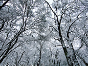 Winter Trees Prints - Winter Wonder Print by Jeff Klingler