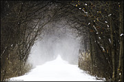 Orchard Trail Prints - Winter wonder snow tunnel of trees Print by LeeAnn McLaneGoetz McLaneGoetzStudioLLCcom