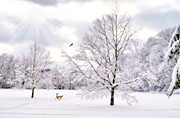 Snow Scene Art - Winter Wonderland by Emily Stauring