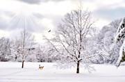 Winter Wonderland Print by Emily Stauring