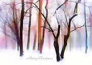 Christmas Card Digital Art Framed Prints - Winter Wonderland Framed Print by Jessica Jenney