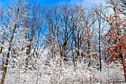 Winter Storm Metal Prints - Winter Wonderland Metal Print by Robert Harmon