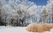 Winter Scene Photos - Winter Wonderland by Robyn Saunders