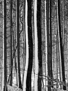 Abstract Snow Prints - Winter Woodlands 2 Print by Heiko Koehrer-Wagner