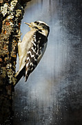 Lena Wilhite - Winter Woodpecker