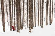 Lake Superior Photos - Winter Woods Magic by Mary Amerman