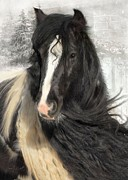 Gypsy Vanner Digital Art - Winter Woolies by Fran J Scott