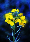 Wintercress Print by Judi Bagwell