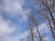 Blue Photos - Winters Blue Sky by Jacque Hudson-Roate