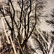 Snowy Night Photo Originals - Winters Eve by Tory Stoffregen