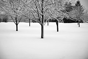 Winter Trees Photos - Winters First Touch by Timothy Johnson