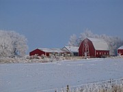 Farming Barns Prints - Winters Frosting Print by Laurie Wilcox