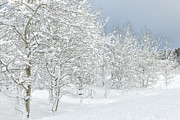 Winter Landscapes Photo Metal Prints - Winters Glory - Grand Tetons Metal Print by Sandra Bronstein