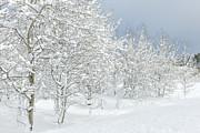 Winter's Glory - Grand Tetons Print by Sandra Bronstein