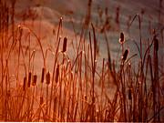 All - Winters Glow by R Thomas Brass