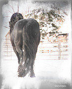 Friesian Posters - Winters Grace Poster by Royal Grove Fine Art