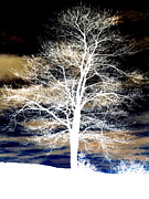Winter Night Mixed Media Posters - Winters Night Sky Poster by Janine Riley