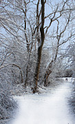 New England Snow Scene Metal Prints - Winters Path 2 Metal Print by Joe Sneekers