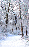 New England Snow Scene Metal Prints - Winters Path 3 Metal Print by Joe Sneekers