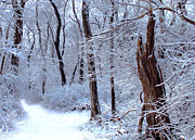 New England Snow Scene Metal Prints - Winters Path 4 Metal Print by Joe Sneekers