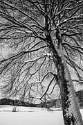 Karol  Livote - Winters Tree