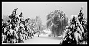 David Lester Prints - Wintery Scenes 1 Print by David Lester