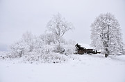 Wintry Landscape Print by Conny Sjostrom