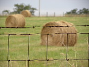 Barbed Wire Fences Framed Prints - Wire and Hay Framed Print by Jewels Blake Hamrick