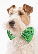 Fox Terrier Posters - Wire Fox Terrier with Bowtie Poster by Verena Matthew