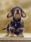 Collie Painting Framed Prints - Wire Haired Dachshund Framed Print by John Silver