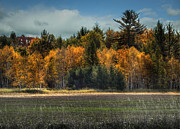 Wisconsin Landscape Prints - Wisconsin Autumn Print by Thomas Young