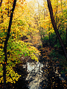 Fall Leaves Photo Originals - Wisconsin fall by Jeff Klingler
