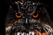 Ryan Wyckoff - Wise Owl