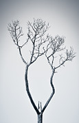 Nature Photos - Wishbone Tree by Carolyn Marshall