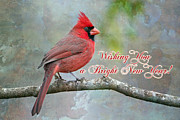 Male Northern Cardinal Prints - Wishing You a Bright New Year Print by Bonnie Barry