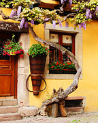 Alsace Framed Prints - Wisteria and Yellow Wall in Alsace France Framed Print by Greg Matchick