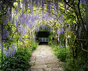 Flag Stones Framed Prints - Wisteria Archway  Framed Print by Tim Gainey