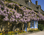 Charming Cottage Photo Originals - Wisteria Cottage  by Paul Felix