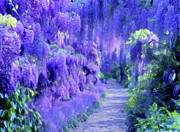 Nature Scene Mixed Media Metal Prints - Wisteria Dreams Impressionism Metal Print by Zeana Romanovna